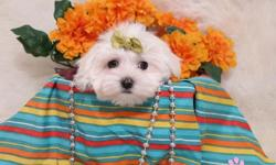 Elegant Tea-Cup Micro Maltese Puppies,(770)467-2945 .Male and Female. Parti White available,these Maltese are very healthy AKC registered,vet check and are current on all their shots and vaccines,these Maltese are so nice to children and other home pets.